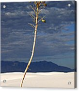 White Sands National Monument 2 White Sands New Mexico Acrylic Print