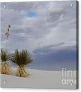 White Sands New Mexico Yucca Plants Acrylic Print