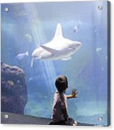 White Shark And Young Boy Acrylic Print by David Smith