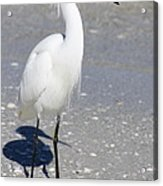 White Silky Feathers Acrylic Print