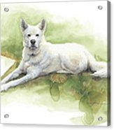 White Sled Dog Lying On Grass Watercolor Portrait Acrylic Print