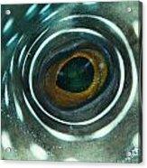 White-spotted Pufferfish Eye Acrylic Print