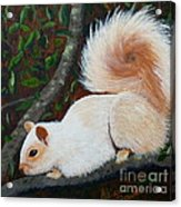 White Squirrel Of Sooke Acrylic Print
