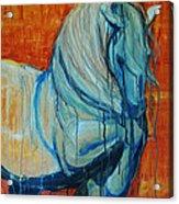 White Stallion Acrylic Print by Jani Freimann