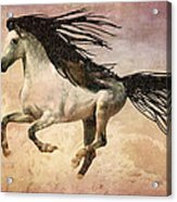 White Stallion Running Free  Acrylic Print