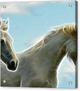 White Stallions Acrylic Print