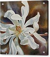 White Star Magnolia Blossom Acrylic Print