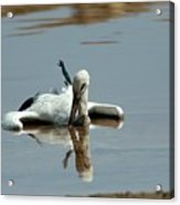 White Stork Drowning In The Dead Sea Acrylic Print