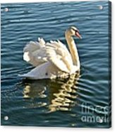 White Swan At Sunset Acrylic Print