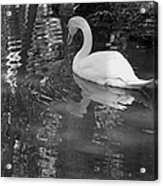 White Swan In Black And White II Acrylic Print