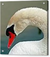 White Swan Profile Acrylic Print