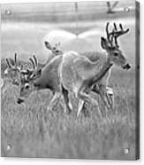 White Tail Shower Acrylic Print