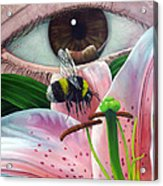 White Tailed Bumble Bee Upon Lily Flower Acrylic Print
