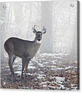 White Tailed Deer Buck In The Mist Acrylic Print