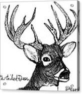 White-tailed Deer Head Acrylic Print