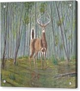 White-tailed Deer - Impressionistic Acrylic Print