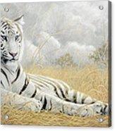 White Tiger Acrylic Print