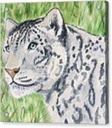 White Tiger Too Acrylic Print