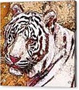White Tiger Twist Acrylic Print