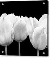 White Tulip Triple On Black Acrylic Print
