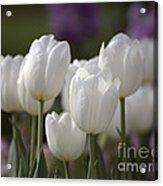 White Tulips 9169 Acrylic Print