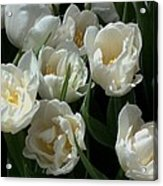 White Tulips In The Garden Acrylic Print