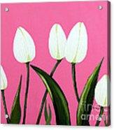 White Tulips On Pink Acrylic Print