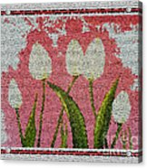 White Tulips On Pink In Stained Glass Acrylic Print