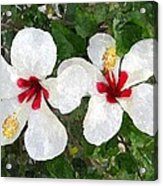 White Twin Hibiscus With Red Veriegation Acrylic Print by Buzz  Coe
