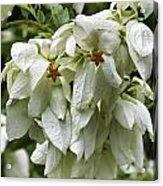 White Veil Of Tropical Flowers Acrylic Print