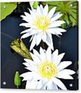 White Water Lilies Acrylic Print by Jeannette Wagner