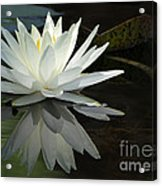 White Water Lily Reflections Acrylic Print