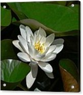 White Waterlily Lotus Acrylic Print