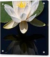 White Waterlily Reflection Acrylic Print