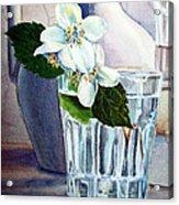 White White Jasmine  Acrylic Print