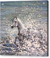 White Wild Horse Acrylic Print