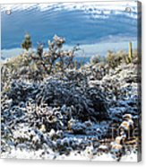 White Winter In The Desert Of Tucson Arizona Acrylic Print
