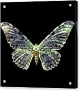 White Witch Moth Acrylic Print