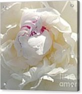 White With Red Peony Acrylic Print