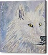 White Wolf Of The North Winds Acrylic Print