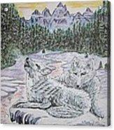 White Wolves Acrylic Print