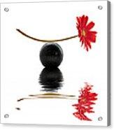 White Zen Gerbera Acrylic Print