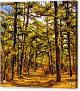 Whitebog Village Woods In New Jersey  Acrylic Print