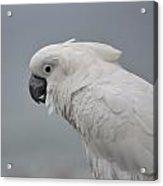 Whitest Bird Acrylic Print by Kiros Berhane