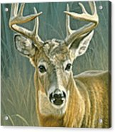 Whitetail Buck Acrylic Print by Paul Krapf