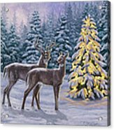 Whitetail Christmas Acrylic Print by Crista Forest