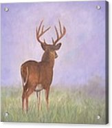 Whitetail Acrylic Print by David Stribbling