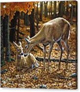 Whitetail Deer - Autumn Innocence 2 Acrylic Print by Crista Forest