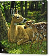 Whitetail Deer - First Spring Acrylic Print by Crista Forest