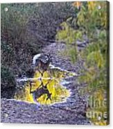 Whitetail Deer Mirrored Acrylic Print